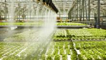 LED innovation lights the way for next-generation farming